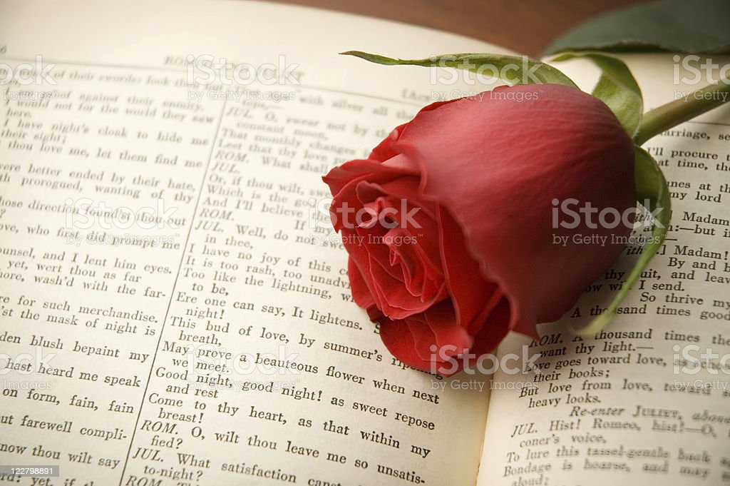 Rose on Shakespeare royalty-free stock photo