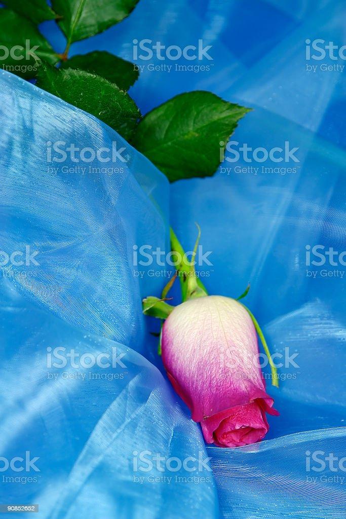 Rose on silk royalty-free stock photo