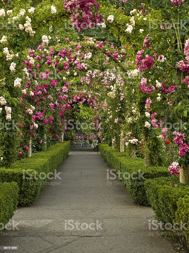 Rose passage stock photo