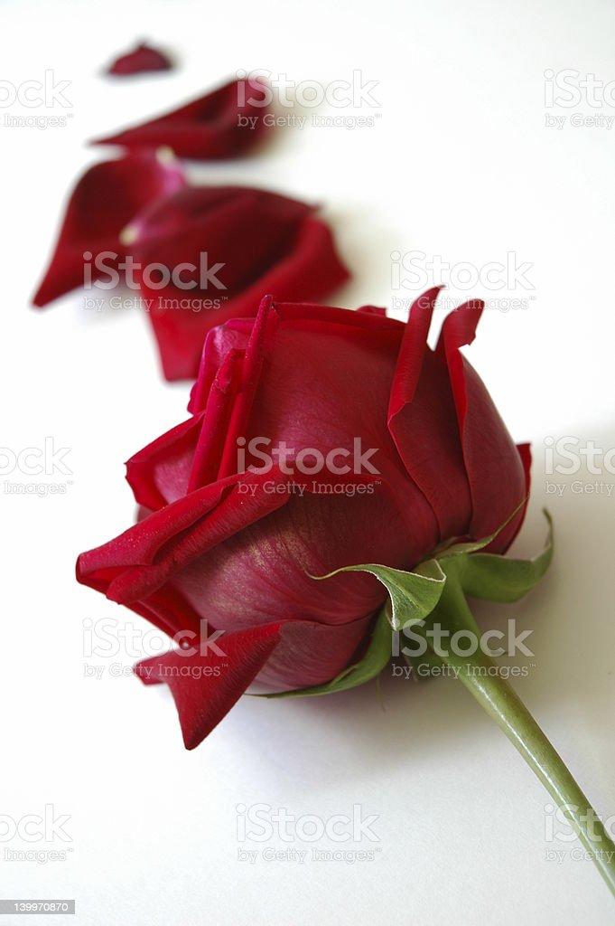 Rose Path royalty-free stock photo