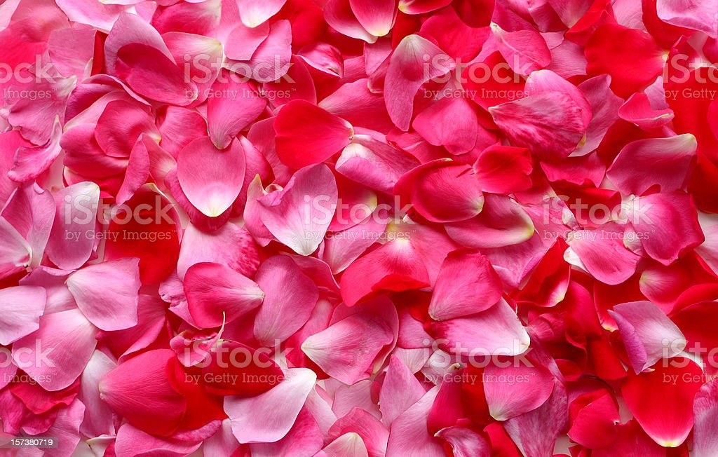 Rose Petal Background stock photo