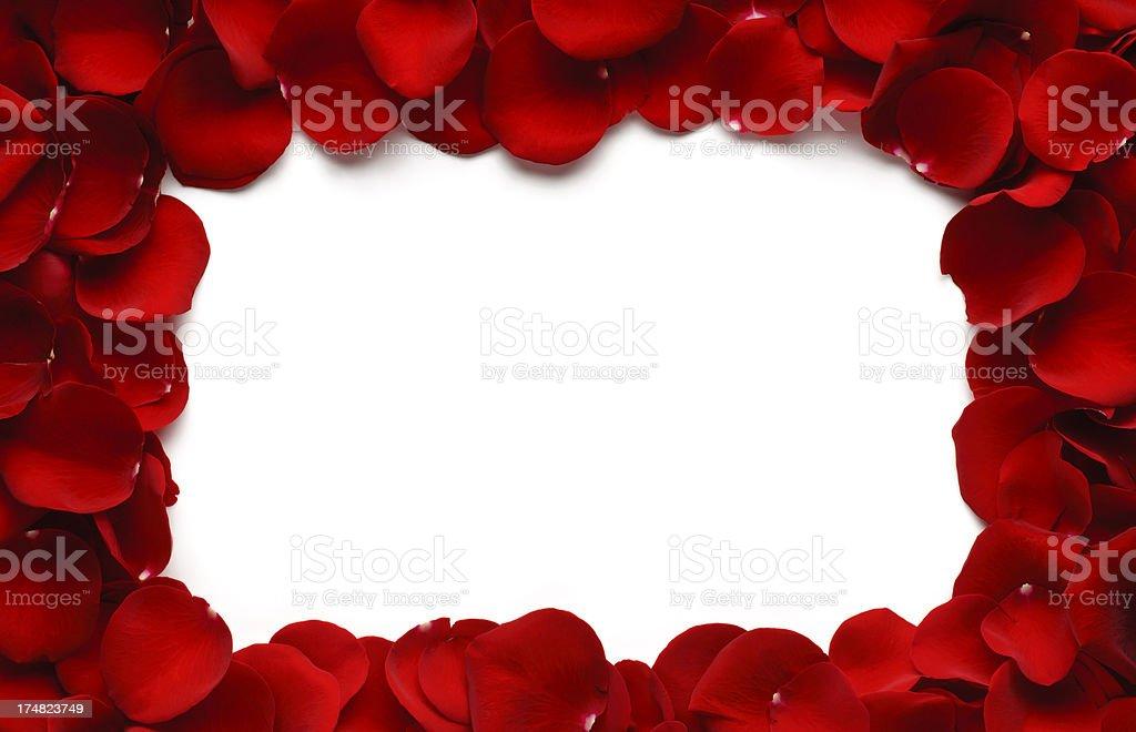 Rose Petal Border stock photo