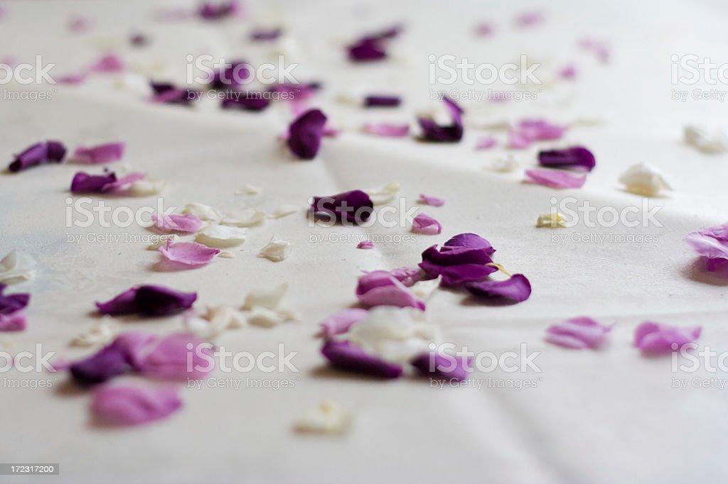 Rose petal confetti royalty-free stock photo