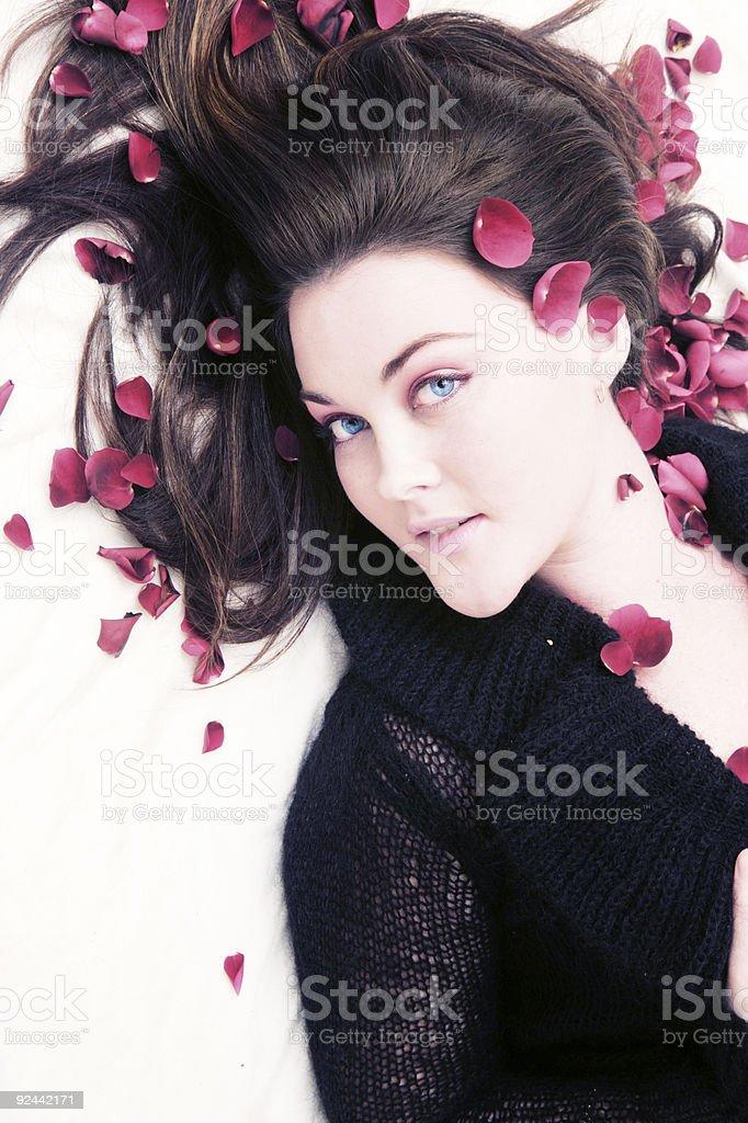 Rose Petal Dreaming stock photo