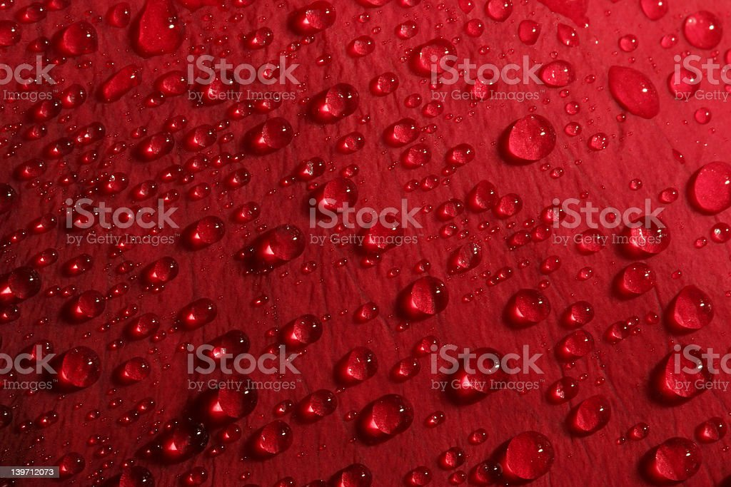 rose petal droplets royalty-free stock photo