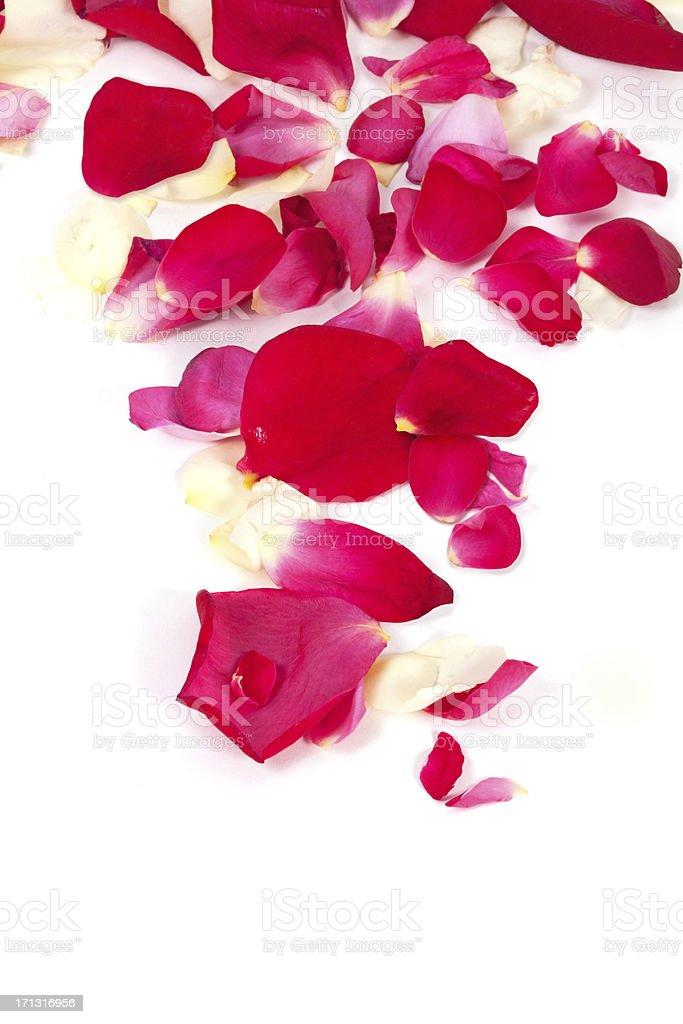 Rose petals arrangement stock photo
