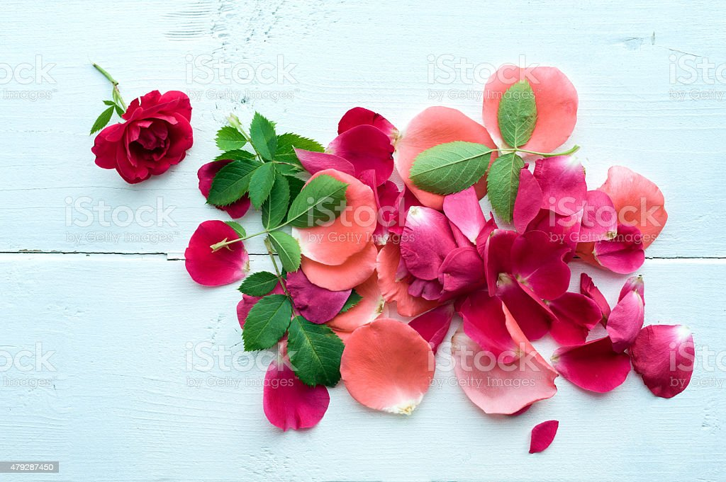Rose petals background stock photo