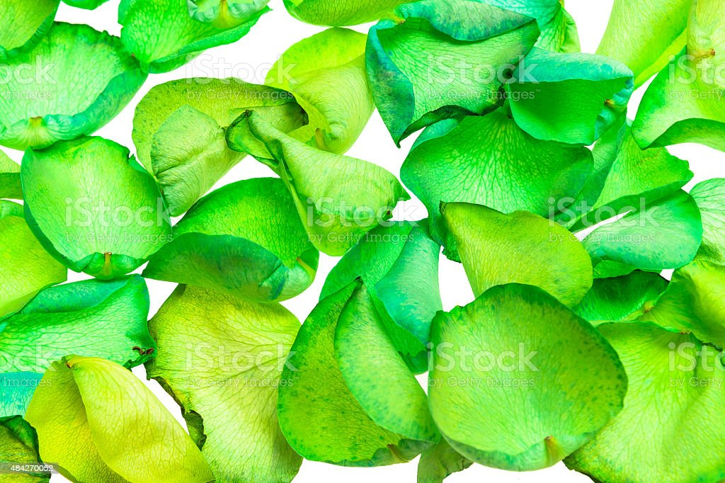 Rose Petals Dyed Green royalty-free stock photo