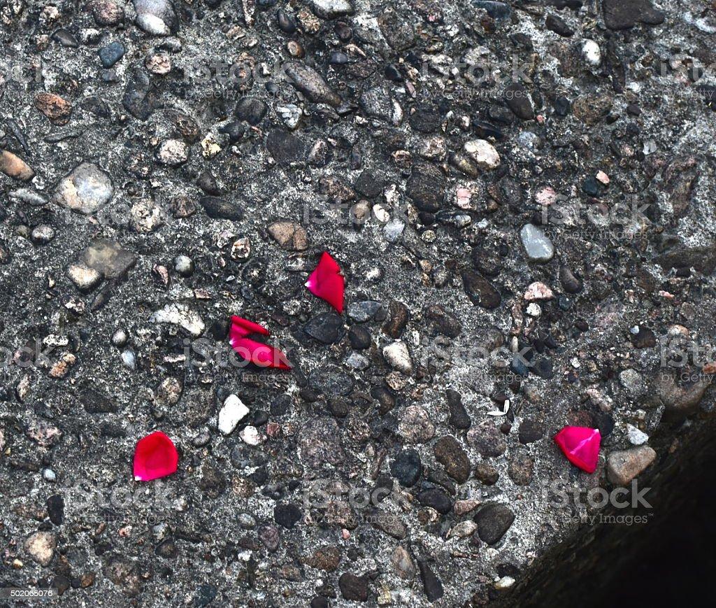 Rose petals fallen on a seashore stone photograph stock photo