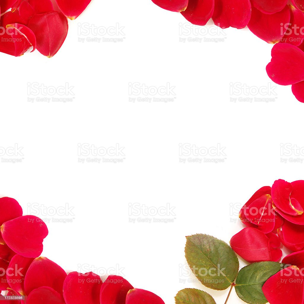 Rose petals frame royalty-free stock photo