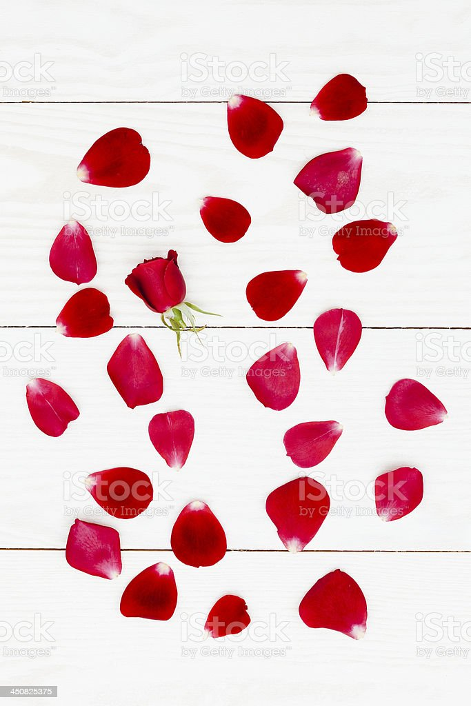 Rose petals on white floor royalty-free stock photo