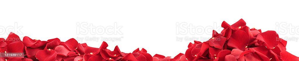 Rose Petals Panorama royalty-free stock photo