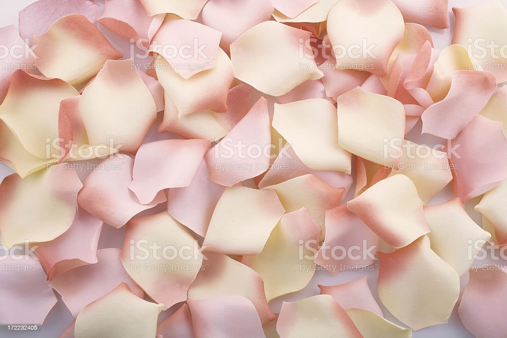 Rose Petals royalty-free stock photo