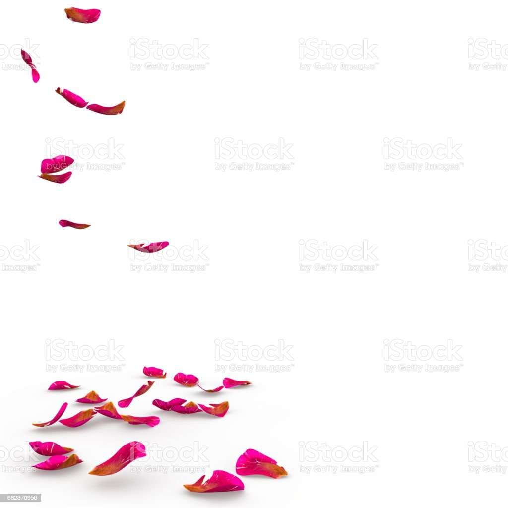Rose petals speckled fall on the floor stock photo