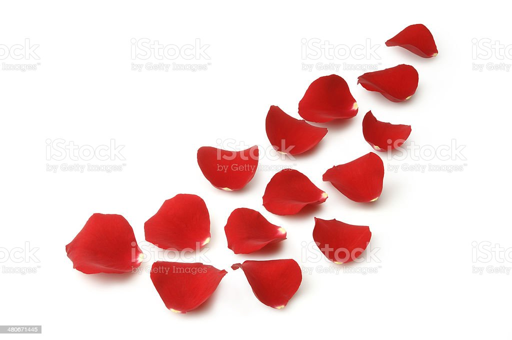 Rose Petals with Path royalty-free stock photo
