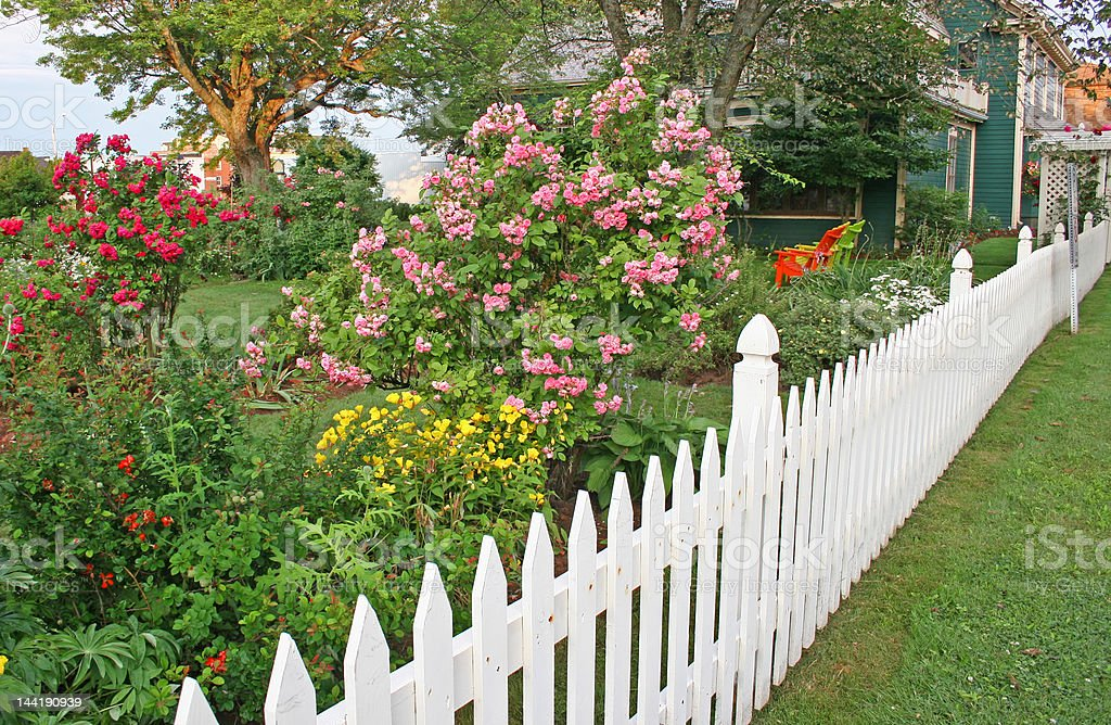 Rose Picket Fence royalty-free stock photo