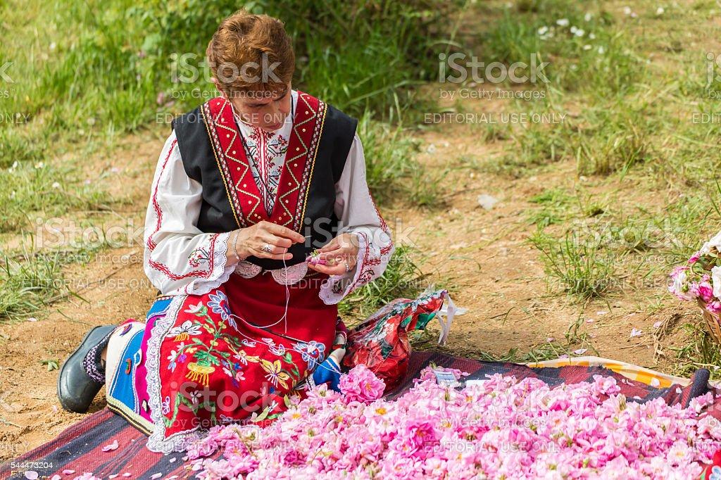 Rose picking festival stock photo