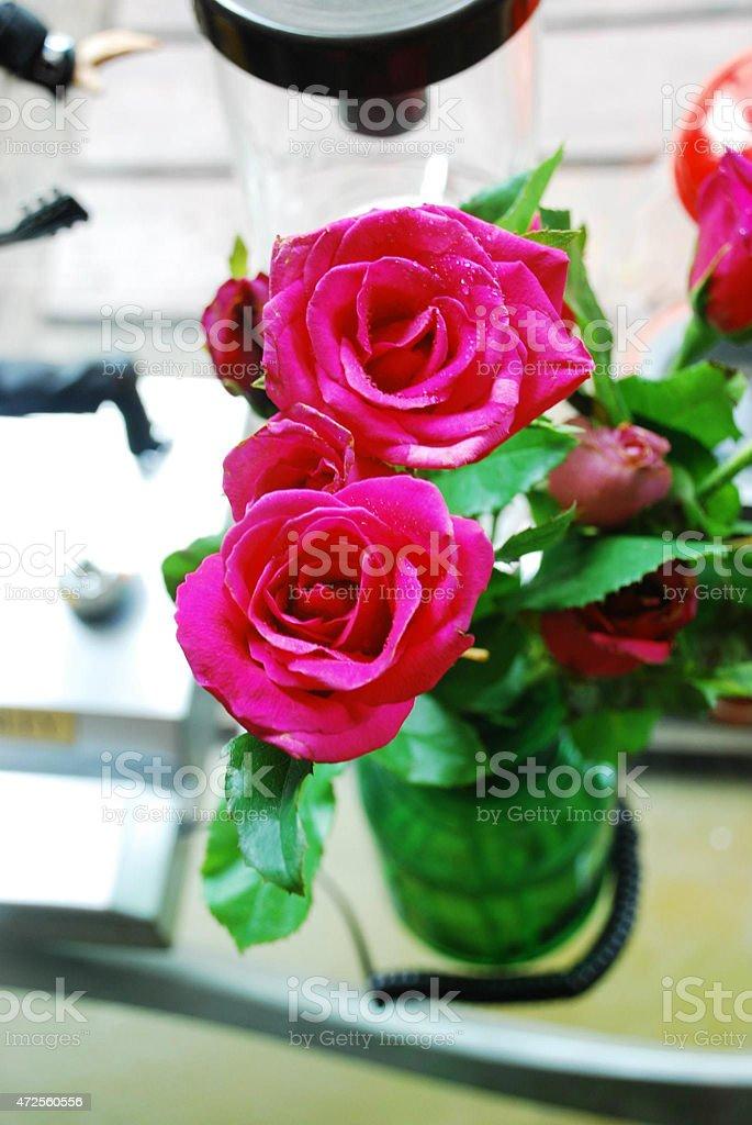 Rose royalty-free 스톡 사진