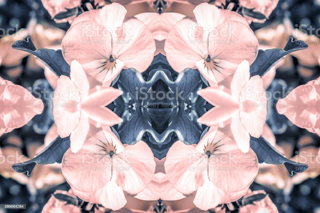 Rose Quartz and Serenity pansies flowers surreal shaped symmetrical kaleidoscope stock photo
