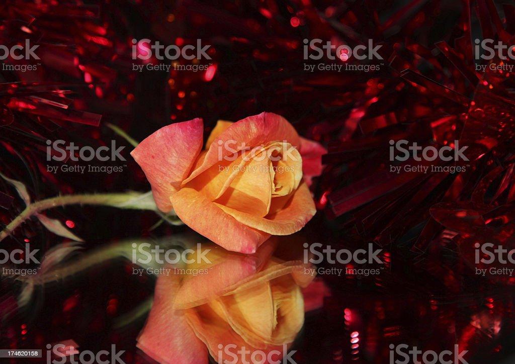 rose reflected stock photo