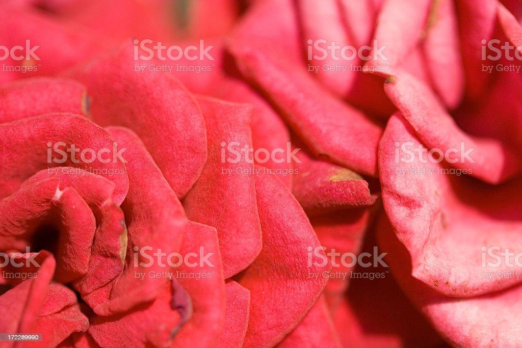 Rose Shapes stock photo