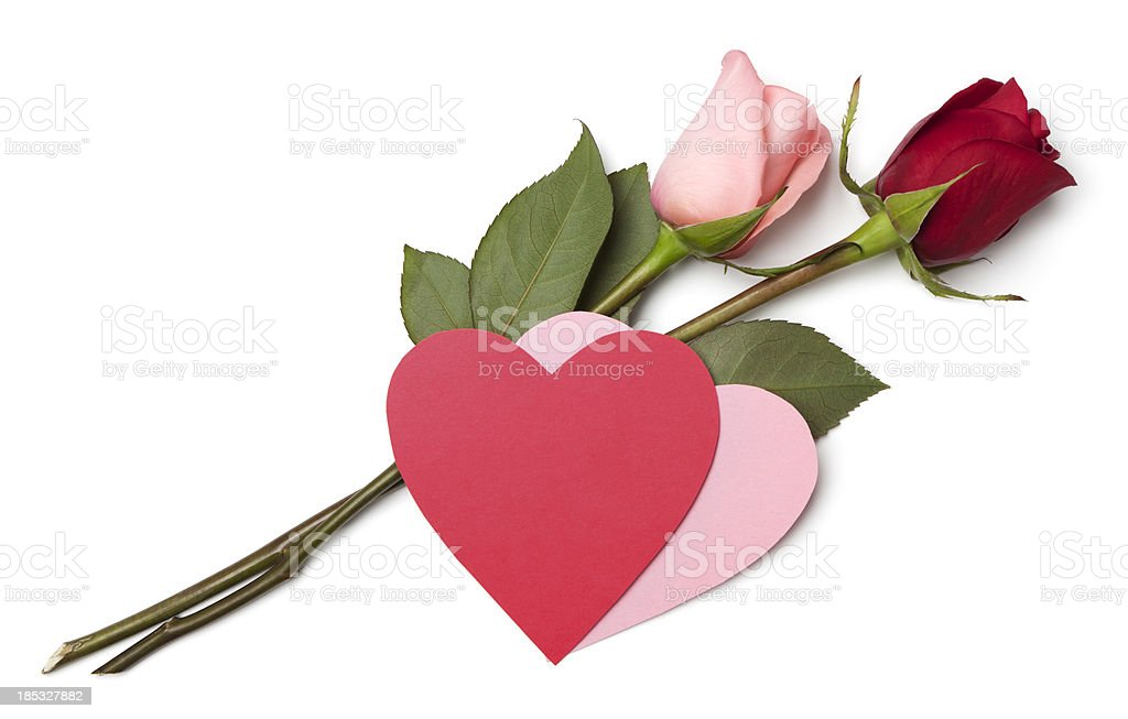 Rose stems and blank card royalty-free stock photo