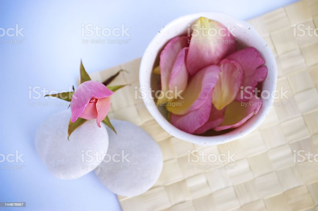 Rose Tranquility royalty-free stock photo