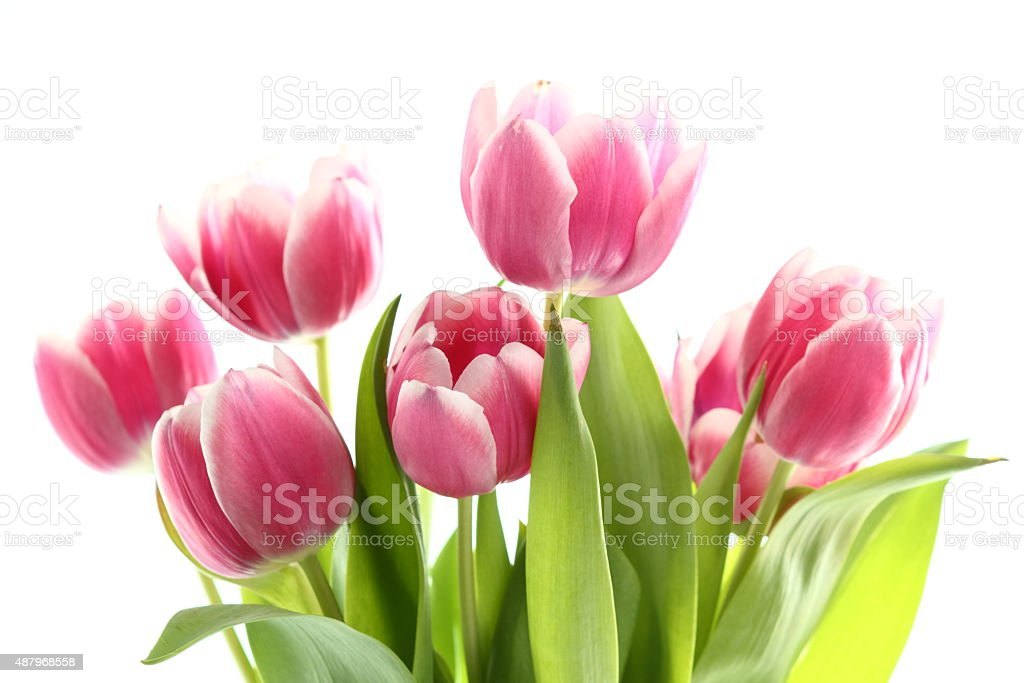 Rose Tulips Bunch stock photo