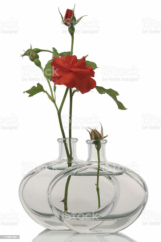 Rose water distilled royalty-free stock photo