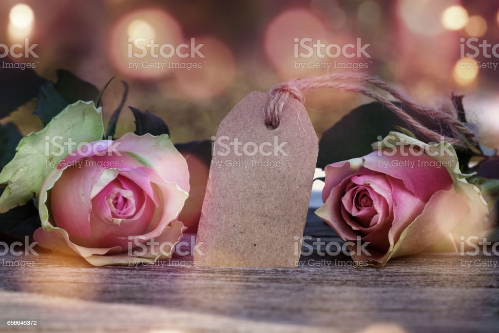 Rose with a greeting for valentines day stock photo