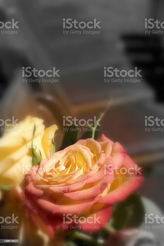 Rose with room for Inspirational Text royalty-free stock photo
