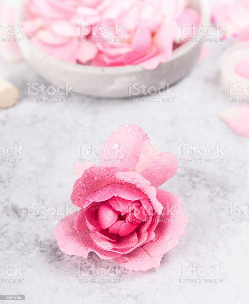 Rose with water drops on gray marble table, spa background stock photo