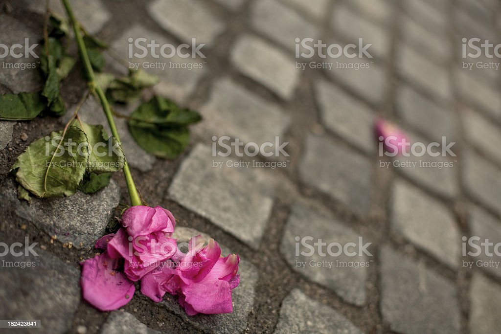 Rose's lying on the street royalty-free stock photo