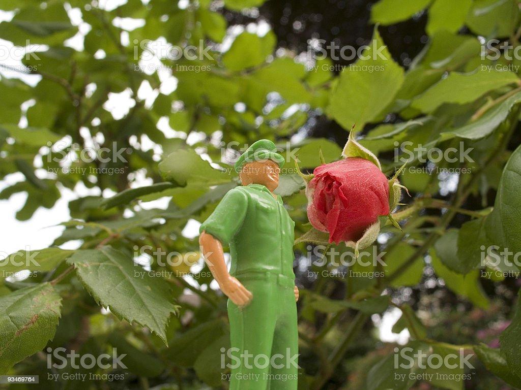roseman royalty-free stock photo