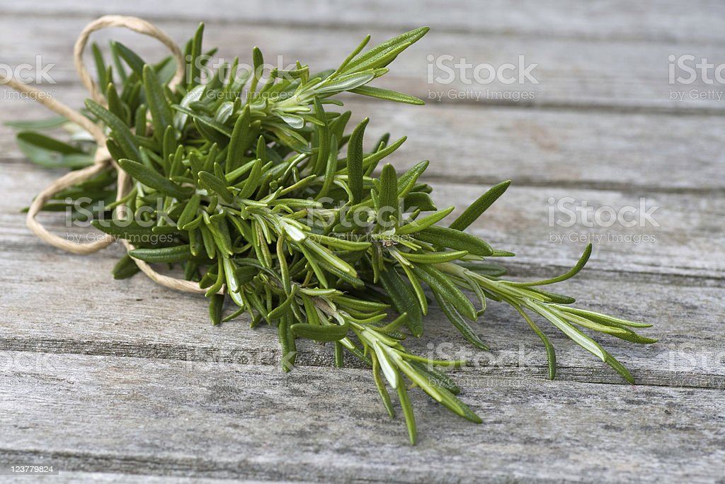 Rosemary bound stock photo