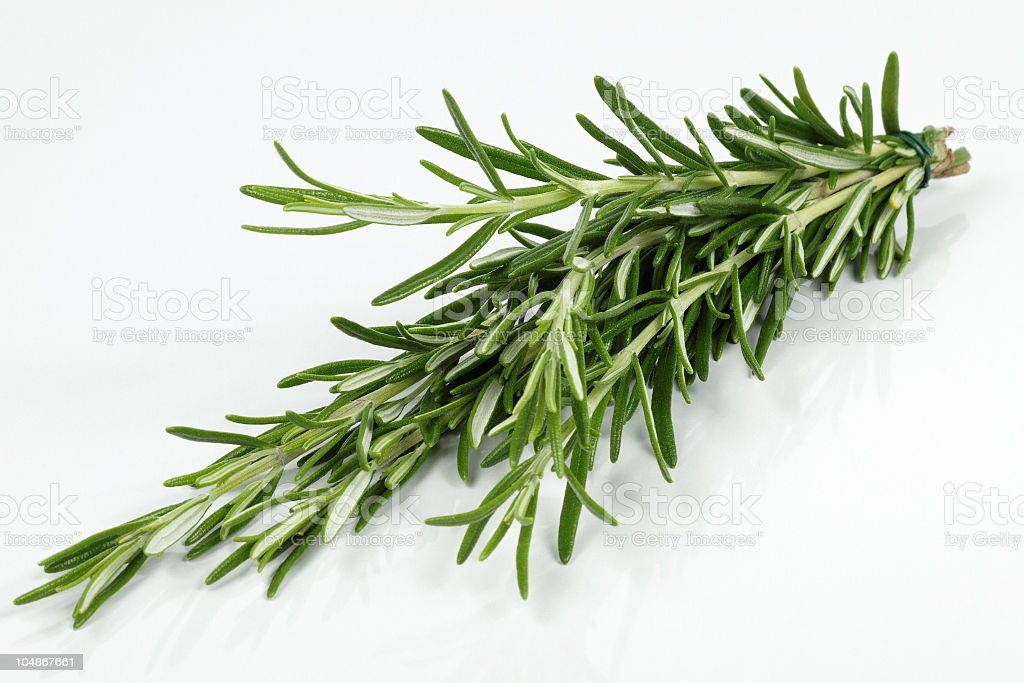 Rosemary branch on a white background stock photo