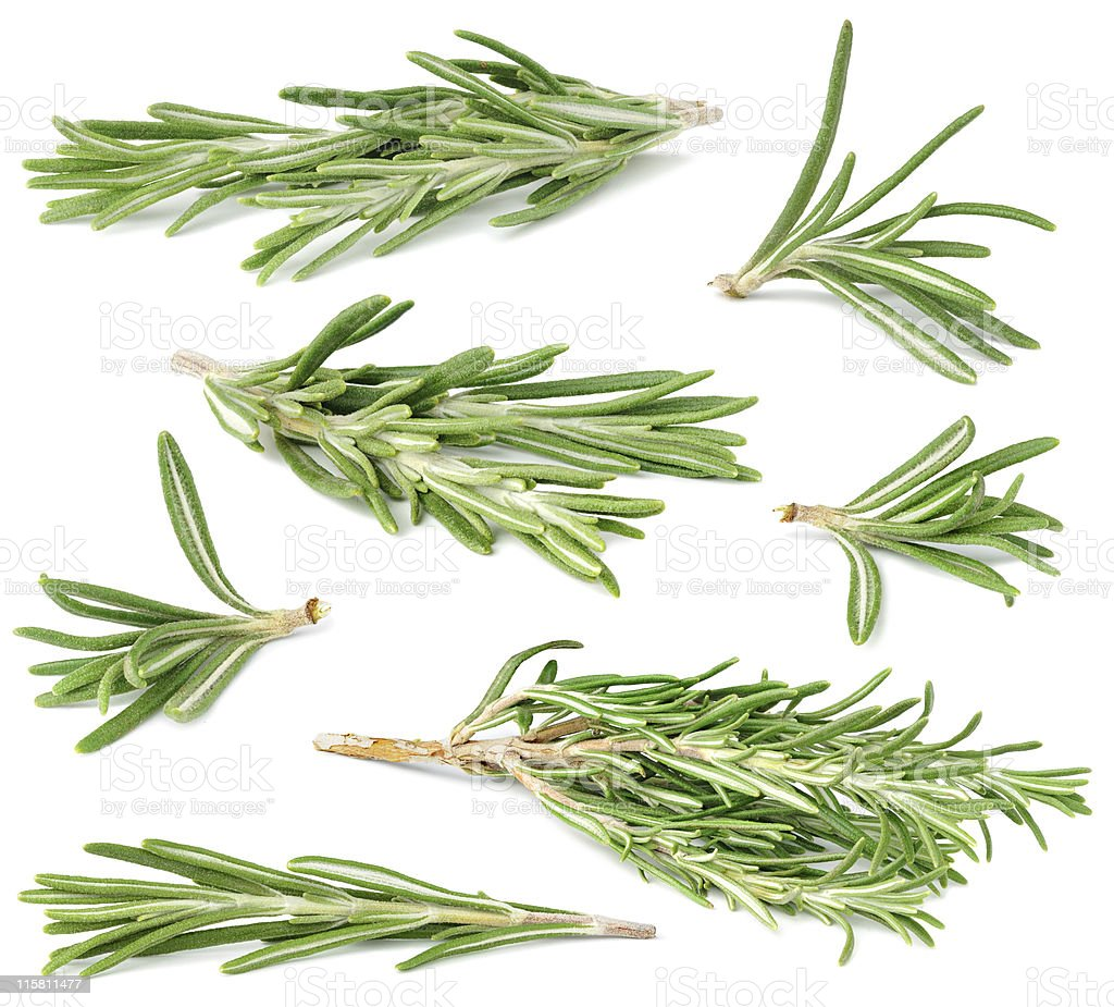 Rosemary collection stock photo