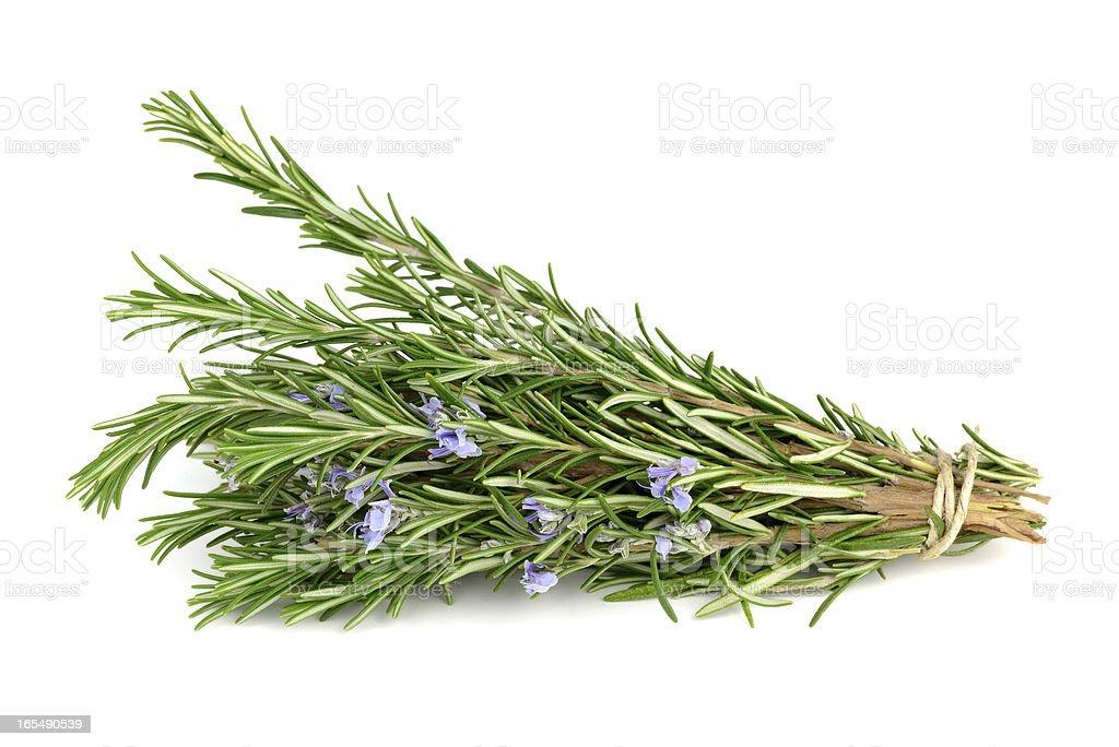 Rosemary isolated on white royalty-free stock photo