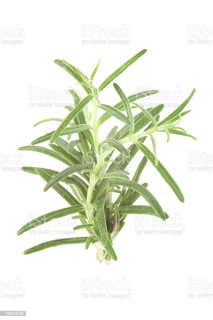 rosemary (rosmarinus officinalis) isolated on white royalty-free stock photo