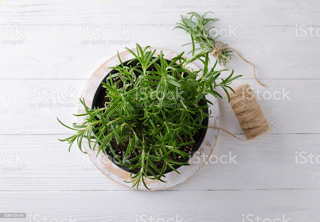 Rosemary on a white wooden background stock photo