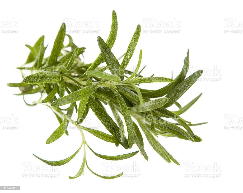 Rosemary (Rosmarinus officinalis) on white background royalty-free stock photo