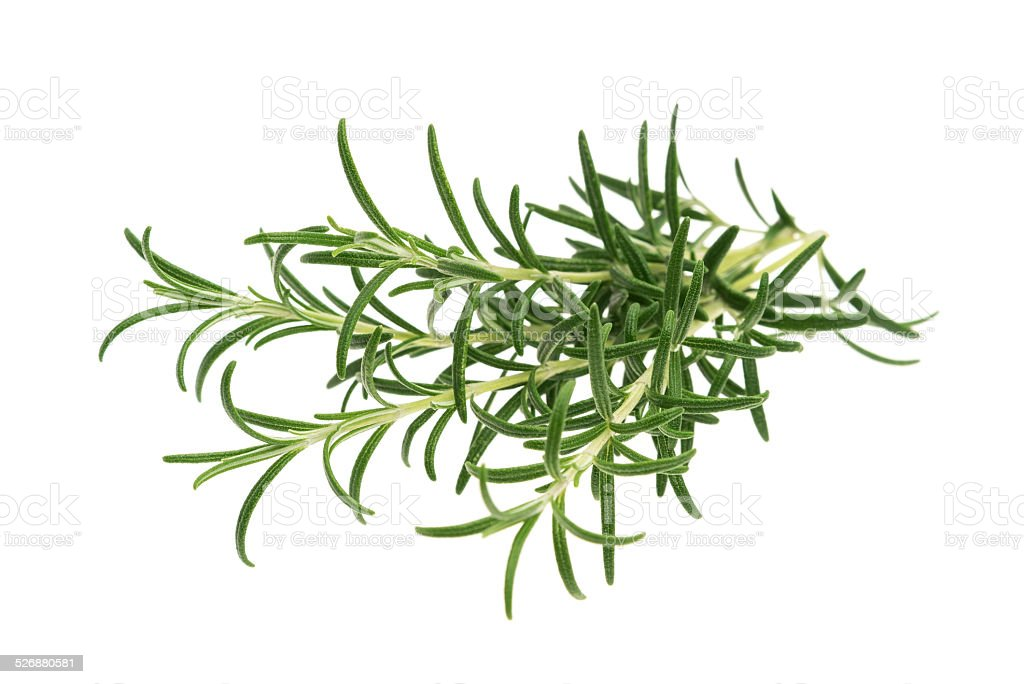 Rosemary stock photo