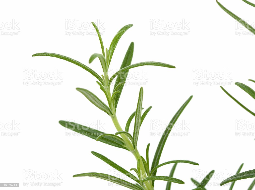 rosemary royalty-free stock photo