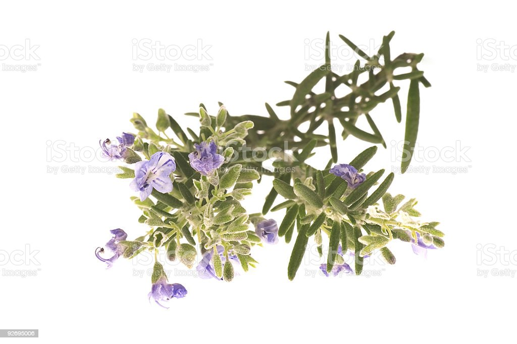 rosemary with flowers royalty-free stock photo