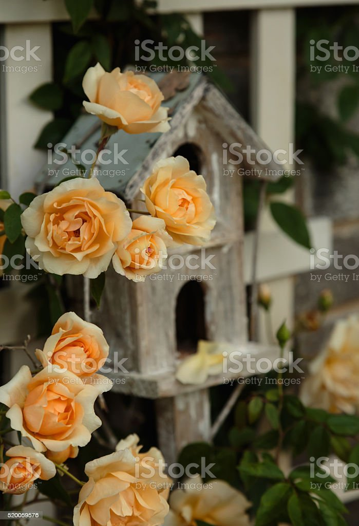 Roses and Bird House stock photo