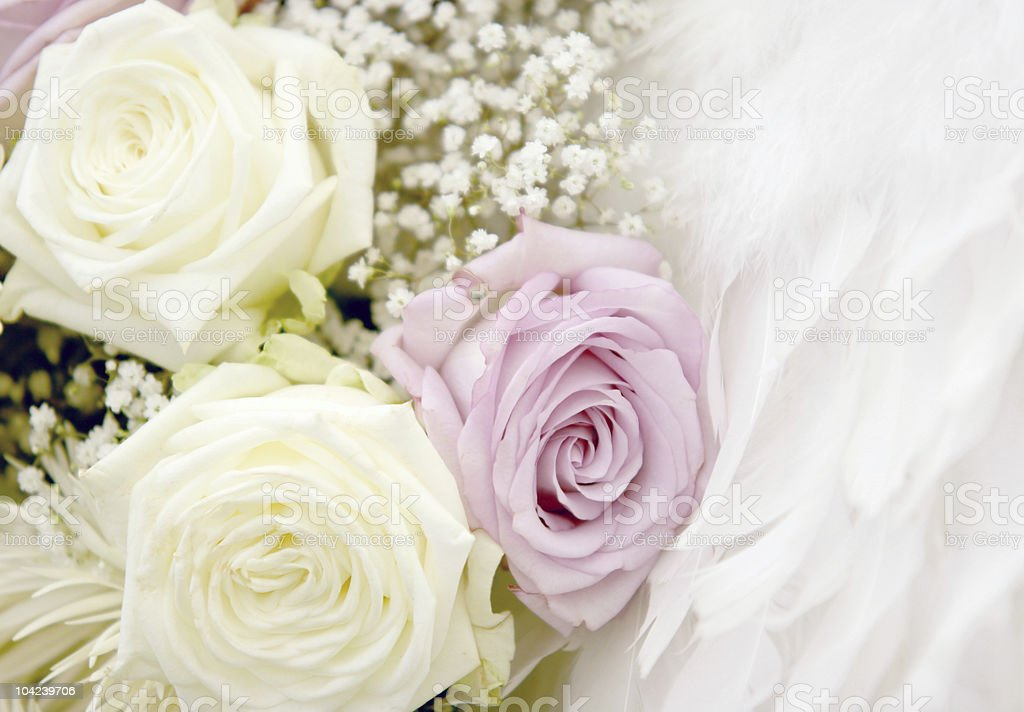 Roses and Feathers royalty-free stock photo