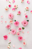 Roses and petals background