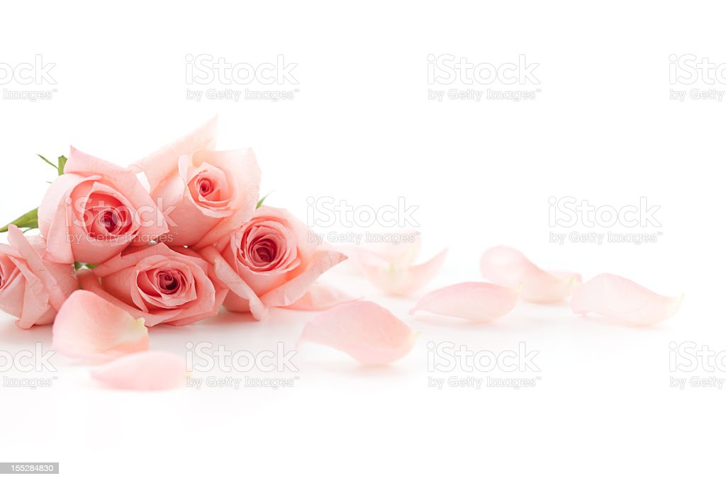 Roses and petals stock photo