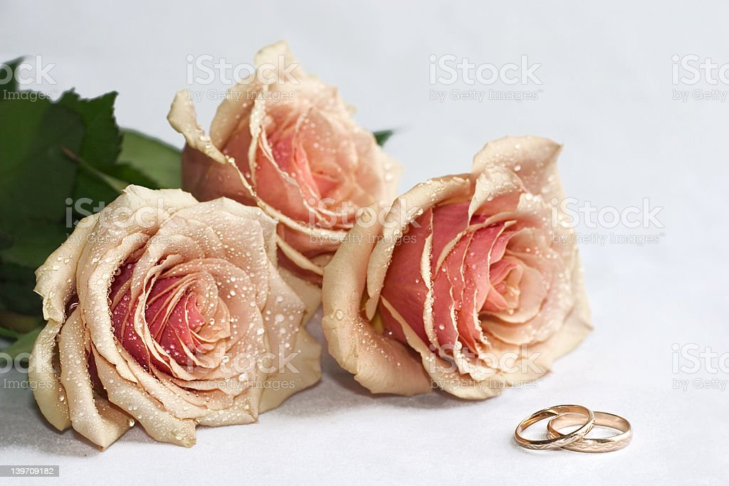 roses and rings royalty-free stock photo