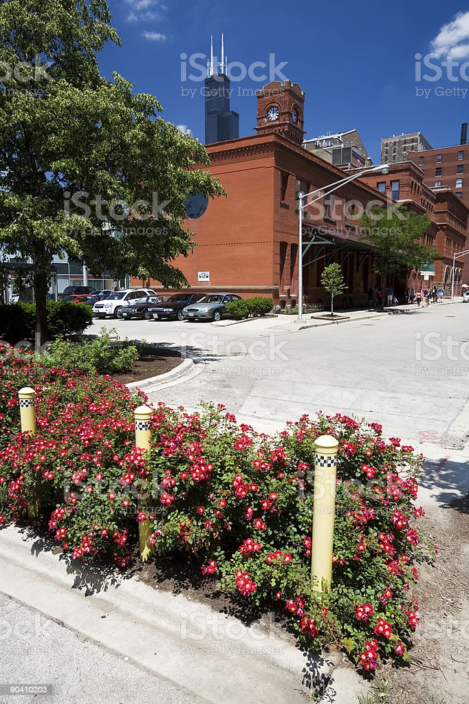 Roses at Dearborn Station royalty-free stock photo